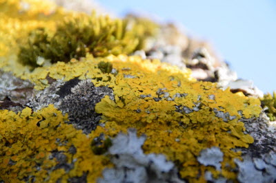 "Workshop ""lichens"""